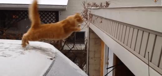 あぶニャい!猫ちゃんを襲った冬の災難