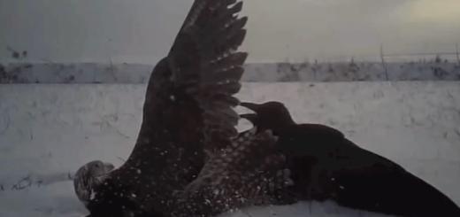 鷹に装着されたカメラの映した衝撃狩り動画