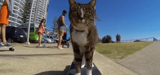 スケートボードに乗る猫のクールな超絶テクニック!