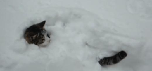 雪だー!大はしゃぎして埋もれる猫ちゃん