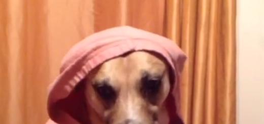 犬に手が生えてエサを食べてる衝撃動画
