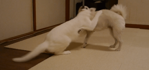 一本!猫の華麗な投げ技