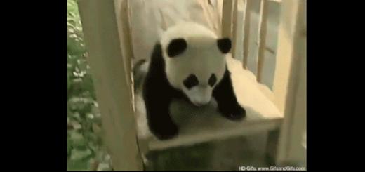 かわいすぎるパンダまとめ