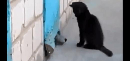 壁に挟まれて動けない犬を見た猫の行動とは・・・