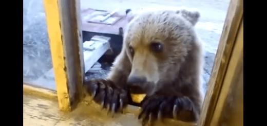 ご飯まだー?ひょっこり窓からやってきたクマがカワイイ