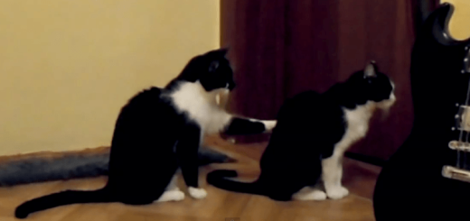 友達猫に謝ろうとする猫のやりとりが衝撃の結末に・・・