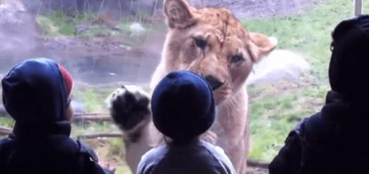 動物園に遊びにきた子どもと動物のやりとりがキュートすぎると大人気!