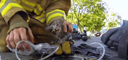 火事の起きた家の中で動かない子猫を発見した消防士は…