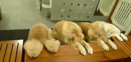 食事前には必ずお辞儀を欠かさない4頭の大型犬が健気でカワイイ