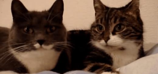 まるで女子会?二匹のネコの奇妙なおしゃべり