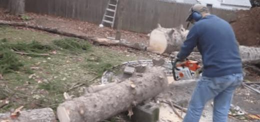 庭の倒木を切る男性に起こったミラクルな事件とは?