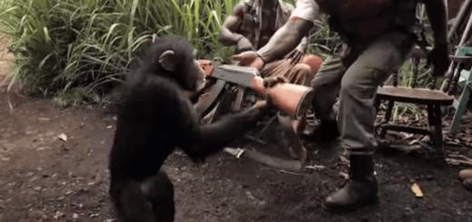 まじかよ!チンパンジーにマシンガンを渡してみた結果…