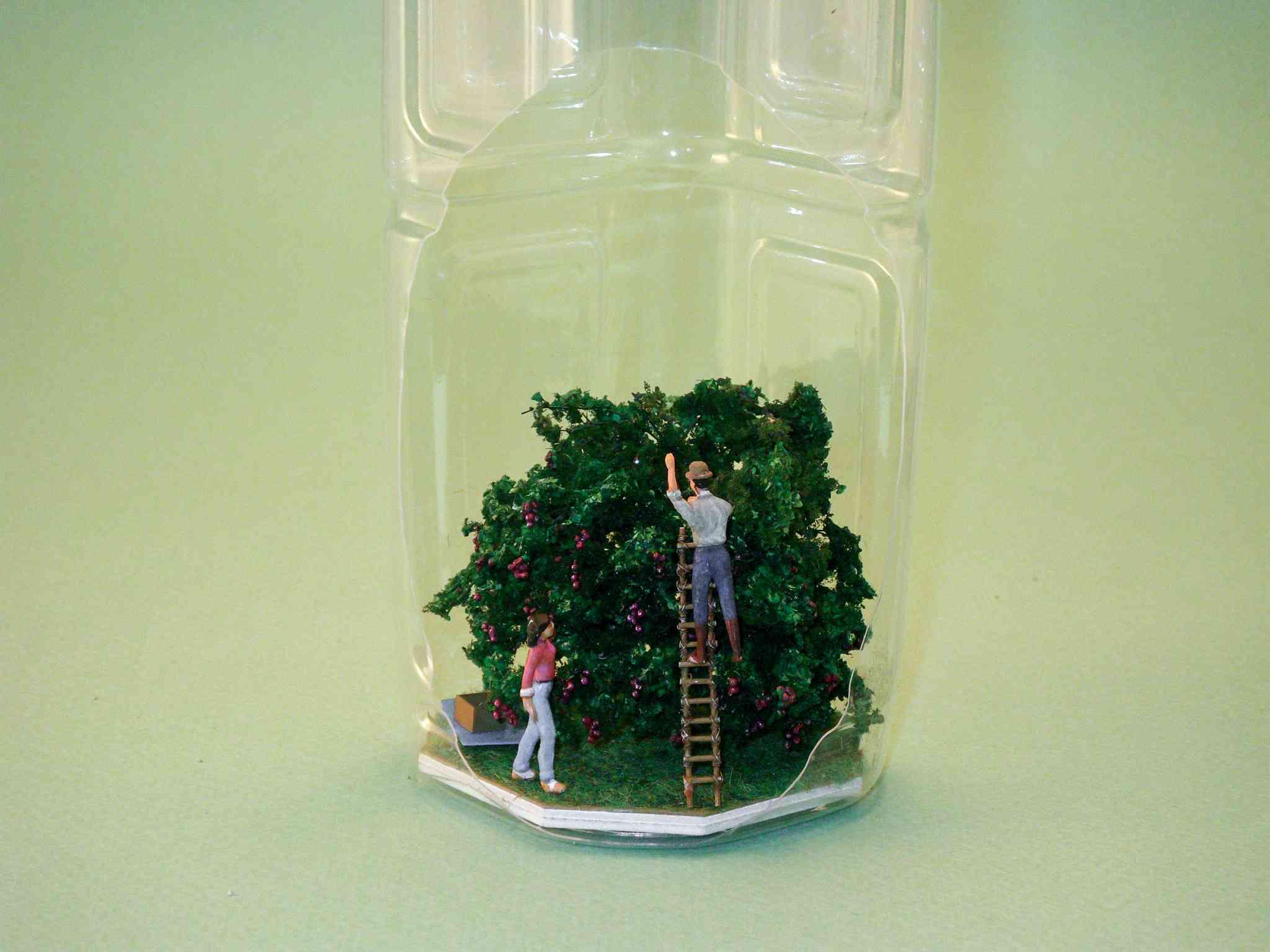 ▼ライチを収穫している一コマ。一本の木から採れるライチは200kg以上だとか。