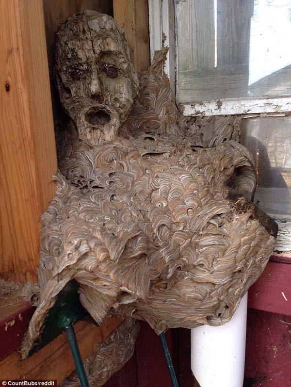 叫んでる顔にみえる形をしたハチの巣が衝撃的!