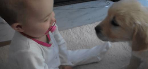 赤ちゃんと子犬のはじめての出会いがカワイすぎてほっこりする