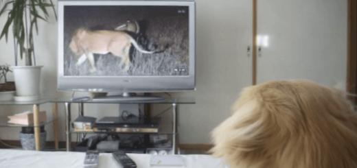 TVに映るライオンを怖がる子犬がキュートすぎる♡