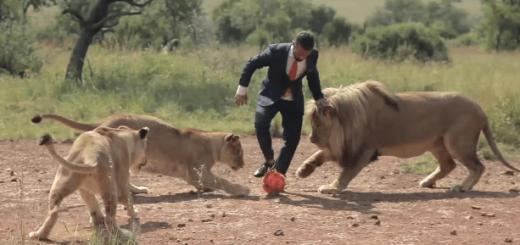 一体何者?ライオンとサッカーをする紳士がワイルドすぎる