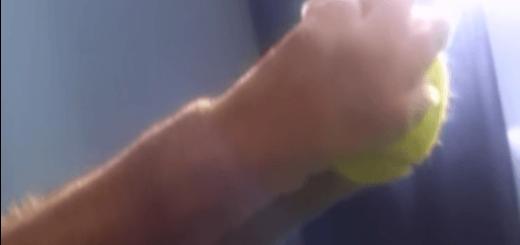 【進化の瞬間】「手」のすばらしさに気付いた犬