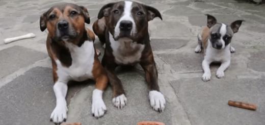 「待て」をする3匹の犬。10秒後、衝撃の行動に…