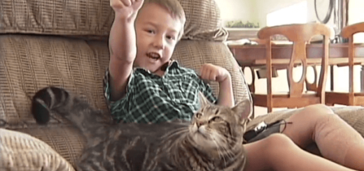 犬に襲われた少年を体当たりで撃退した猫の勇気に世界中が涙。