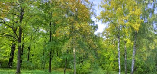 一年間分の木の成長を40秒に凝縮。自然はこんなにも力強く、美しい。