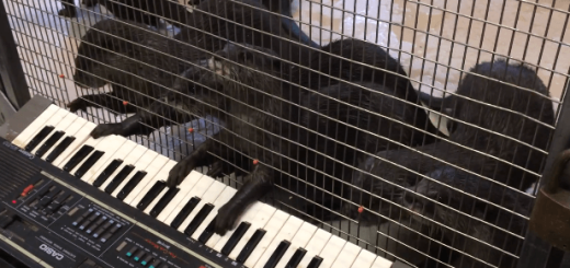コツメカワウソによるピアノコンサートがめちゃキュート♡
