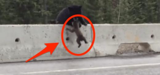 道路に落ちたコグマを見て、母グマのとった行動とは…