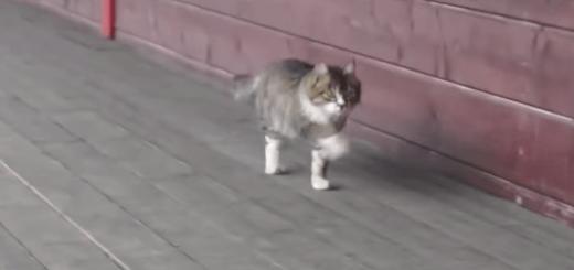 【二度見必至】ヘンテコな歩き方のネコ