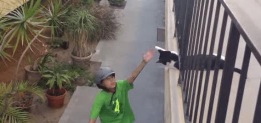 ハイタッチする猫と少年がほのぼのしてて癒やされる