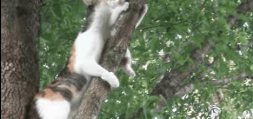 ニャンだって!?樹から降りられない仔猫を母猫がレスキュー!