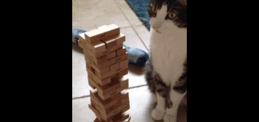 猫「ジェンガだったら負けないニャ!」
