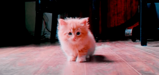 かわいい猫がカメラ目線で歩いてくるだけの動画にキュンキュンしちゃう♪