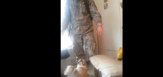 犬顔負け?軍役から帰宅した主人を熱烈歓迎するネコ