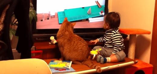 仲良くテレビを観ている赤ちゃんとネコの笑撃ラスト