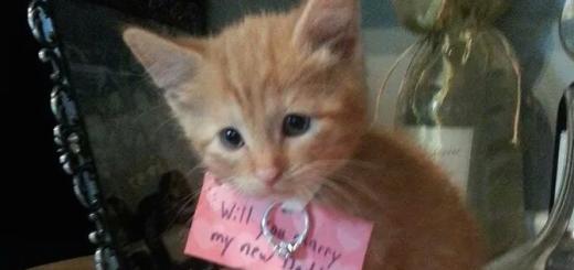 これは断れない…。子猫を使ったプロポーズがカワイすぎる