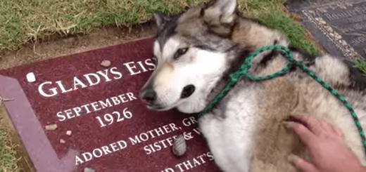 飼い主だったおばあちゃんのお墓の前でむせび泣く犬
