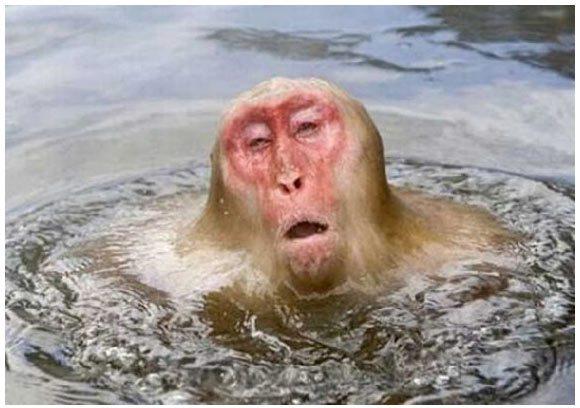新種の生物?水に濡れた動物たちがオモシロカワイイ