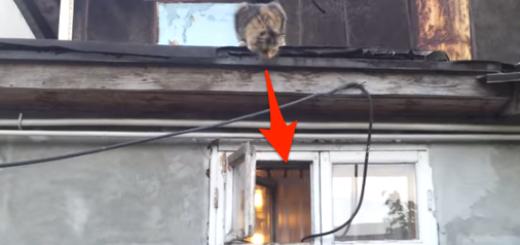ドロボウ顔負け? 屋根の上から窓に侵入するネコ