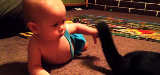 """猫流の""""赤ちゃんのあやし方""""にほっこり"""