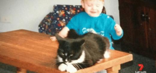 13年間行方不明だったネコがキセキの帰宅