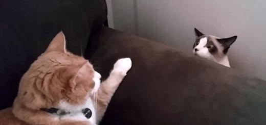 一触即発!? ネコの「はじめまして」がじわじわくる