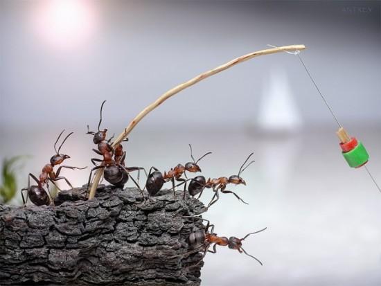 """モデルはすべて生きたアリ!童話のような""""アリの日常"""""""