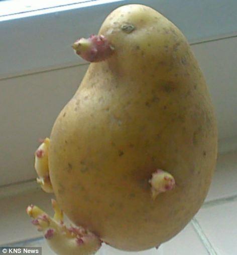 本当に野菜なの?思わず目を疑う変な形の野菜たち15選