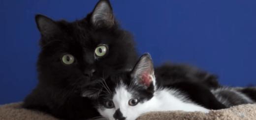 険悪だった2匹のネコを親友にする方法