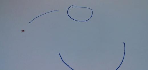 紙とペンをつかって虫と一緒に遊べる意外な方法