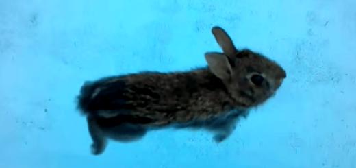 ウサギをプールに入れてみたら……