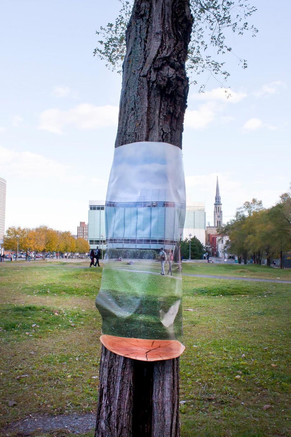 浮いてる…だと…?木を重力から解き放つ幻想的な透明アート