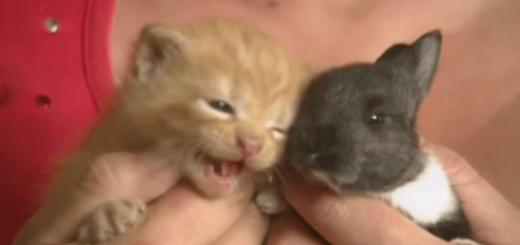 仔猫と一緒に親を亡くした仔ウサギを育てる母猫の愛に感動