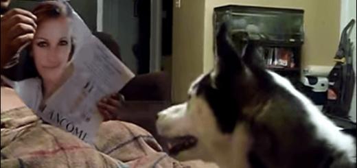 近づきたいのに〜! ジュリア・ロバーツが怖くてどうしようもないハスキー犬