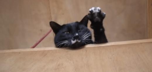 何度でも呼びたい!! 名前を呼ばれると手をあげてお返事するネコ